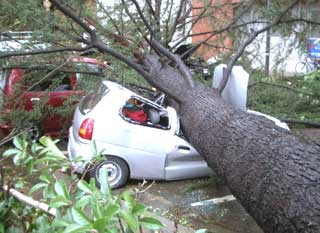 xtree-removal-in-charlotte.jpg.pagespeed.ic.IkrYknsB6q
